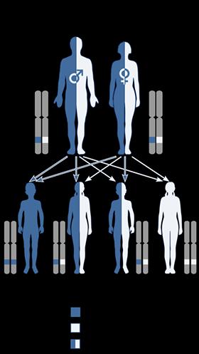 Congenital Muscular Dystrophy ~ Autosomal recessive inheritance